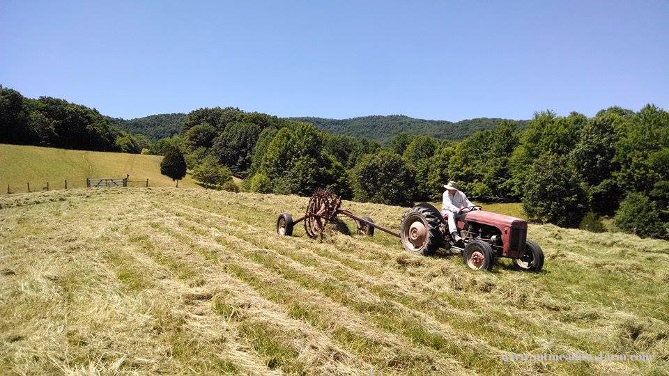 Getting ready for baling in the big hayfield, July 2014
