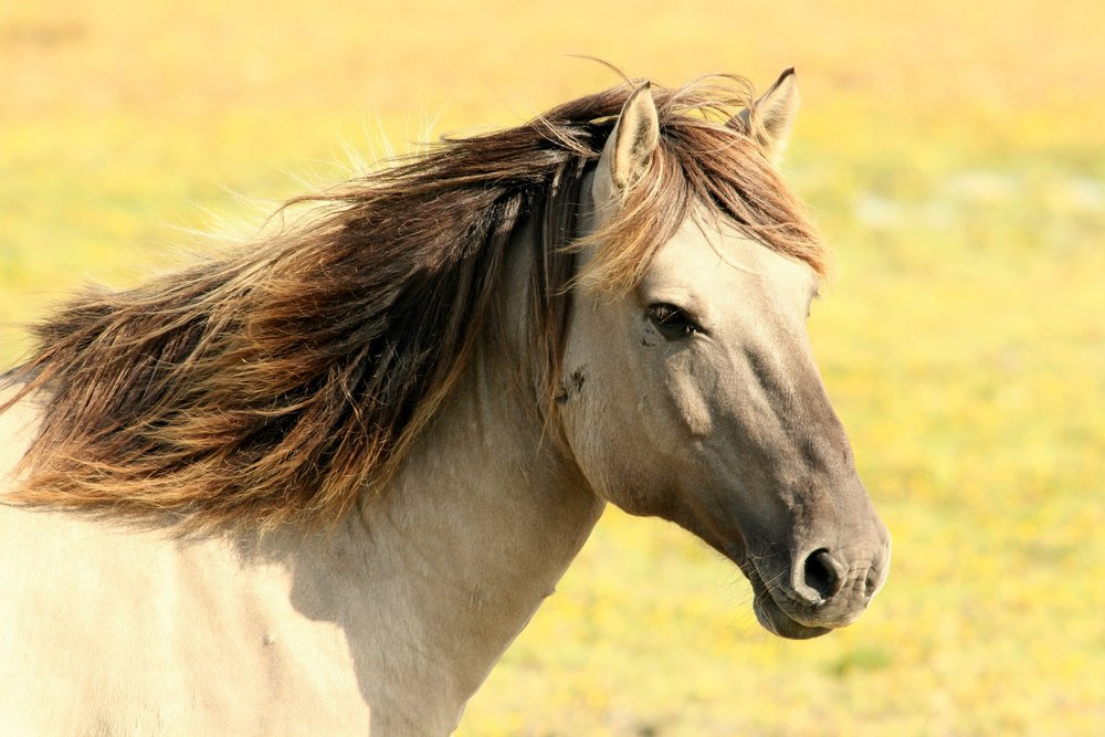 horse-197199_1920.jpg