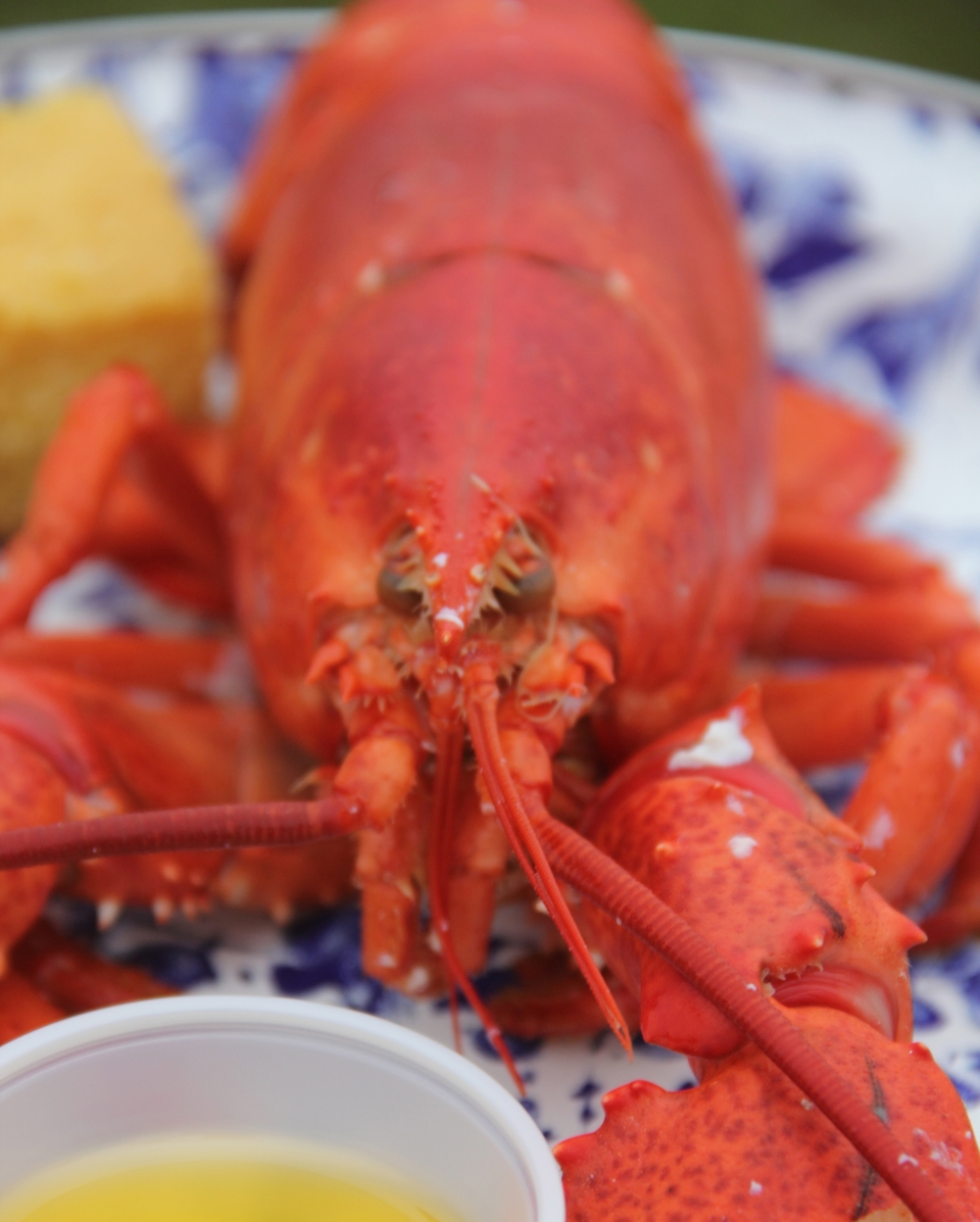 Kelley Lobster Close Up.jpg