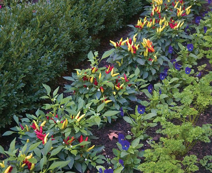 edible garden 2.jpg