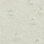 Avestruz blanco