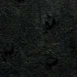 Avestruz negro