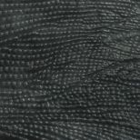 Iguana gris