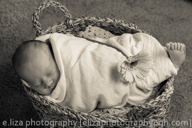 newborn photography :: pittsburgh :: e.liza photography :: www.elizaphotographypgh.com