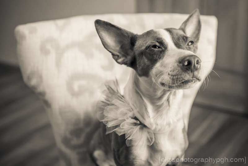 Pet Photography :: Pittsburgh :: e.liza photography :: www.elizaphotographypgh.com