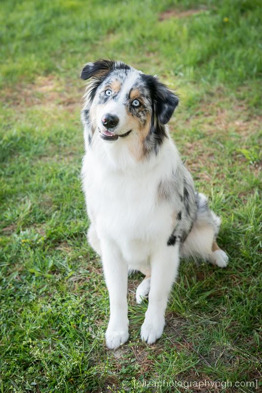 Pet Photography :: Pittsburgh :: www.elizaphotographypgh.com