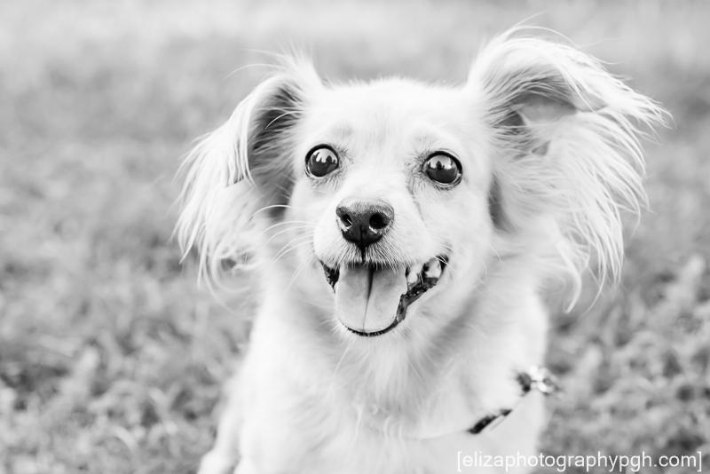 Pet Photography : Pittsburgh : www.elizaphotographypgh.com