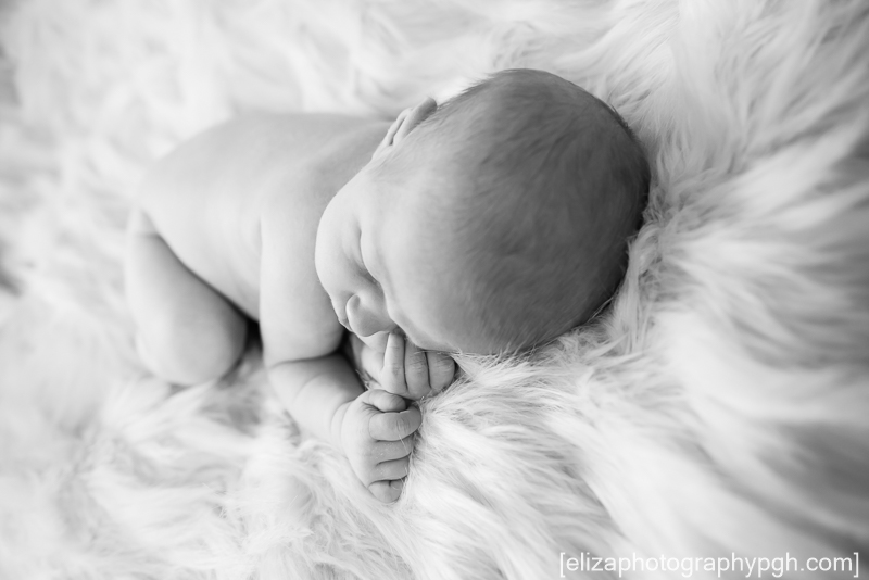 newborn photography : pittsburgh : www.elizaphotographypgh.com