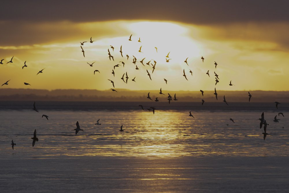 Waders at Kilnsea