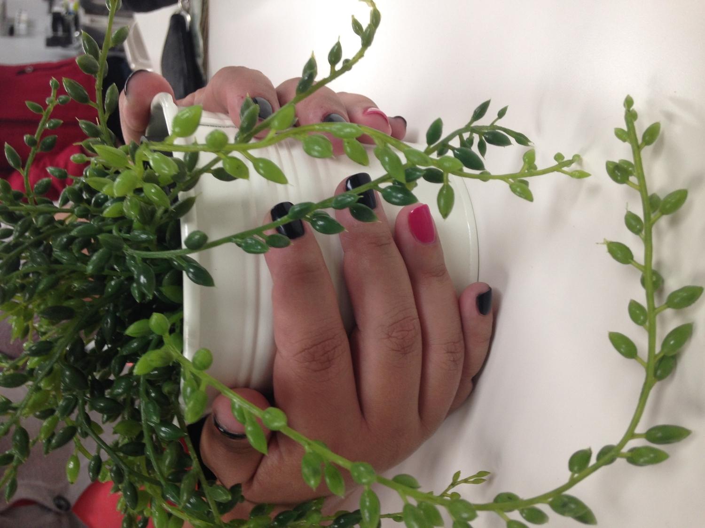 Botanic Nail School — Program