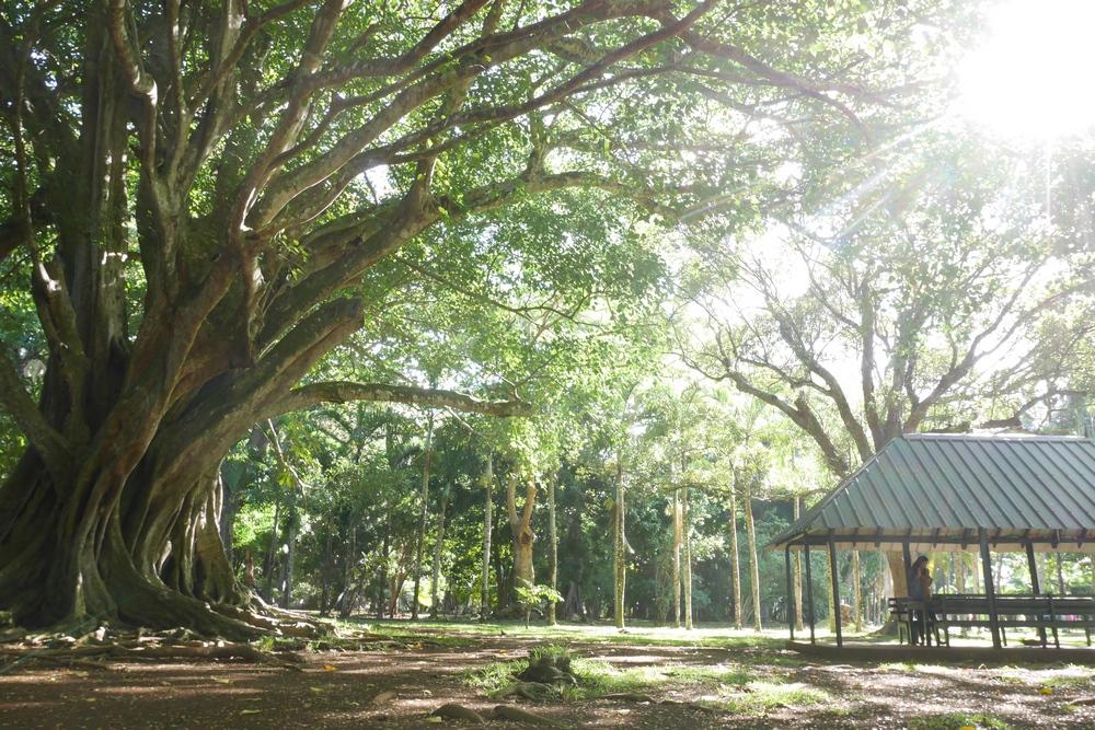 garden_working_mauritius