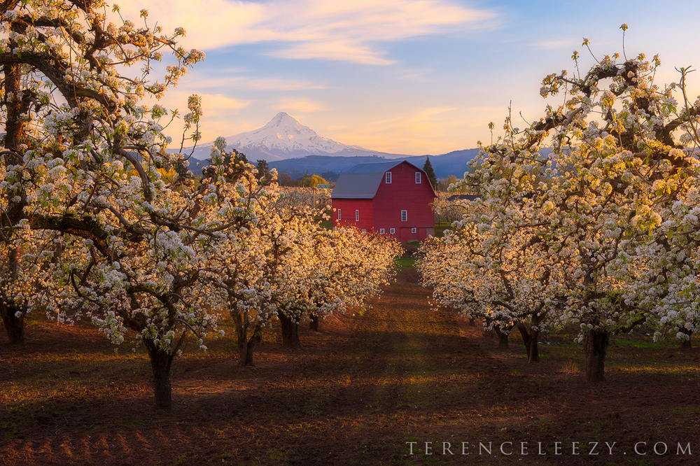 April - Red Barn, Hood River, Oregon