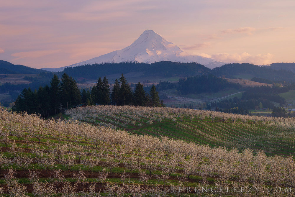 April - Hood River, Oregon