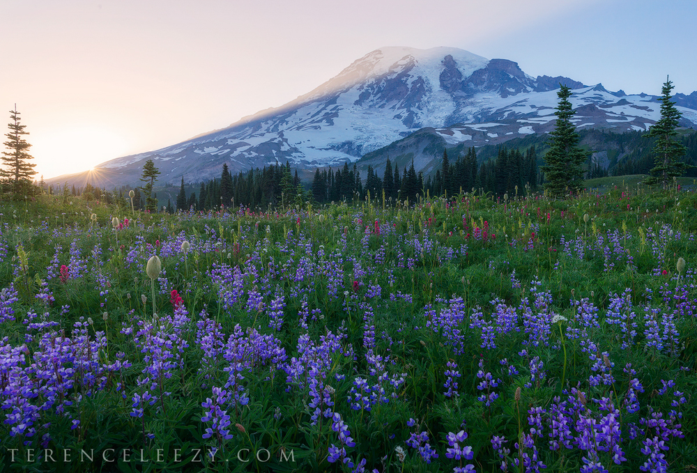 July - Mount Rainier, Washington.