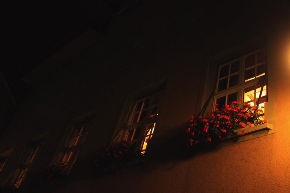 Wallflowers.JPG
