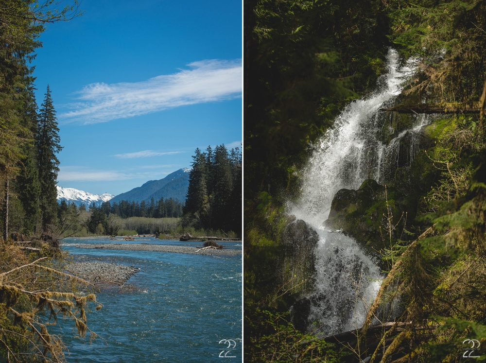 Hoh Rainforest | Olympia National Forest | Seattle Wedding Photographers