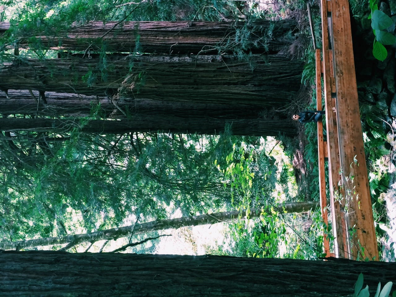 First stop: Muir Woods to see the magnificent red woods forest.
