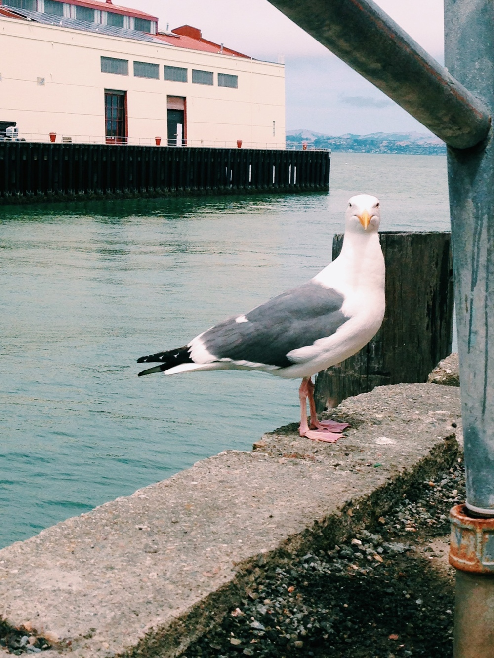 Even the Seagulls are happy in SF