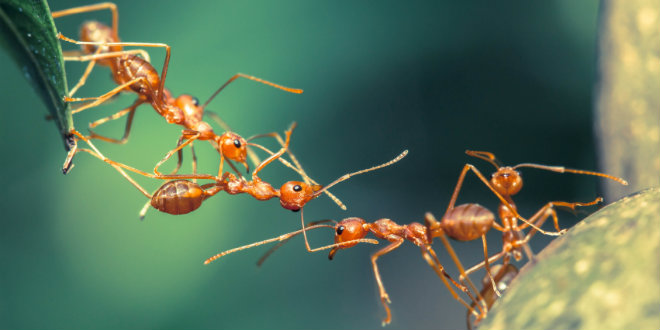 ants team building