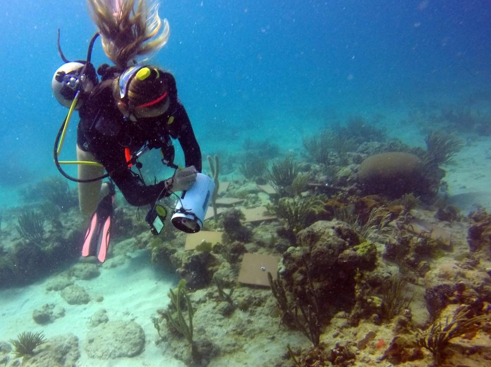 Taking algal measurements