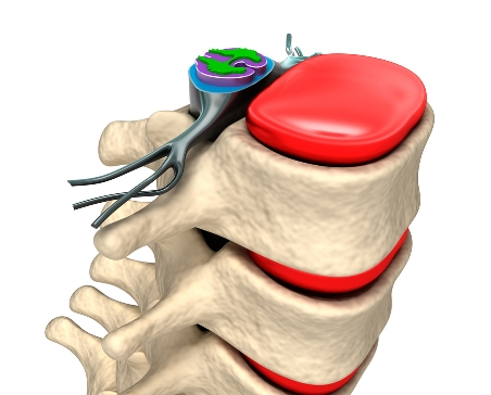 bigstock-Spinal-column-with-nerves-and--42053143.jpg