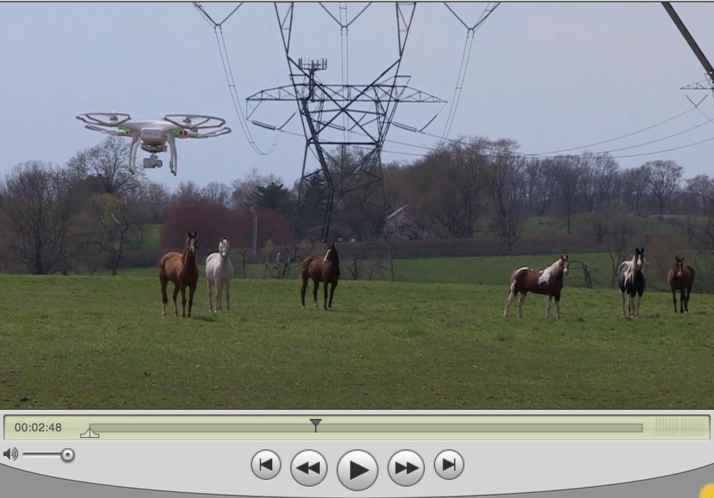 """""""Mr. Drone meets Horses"""""""