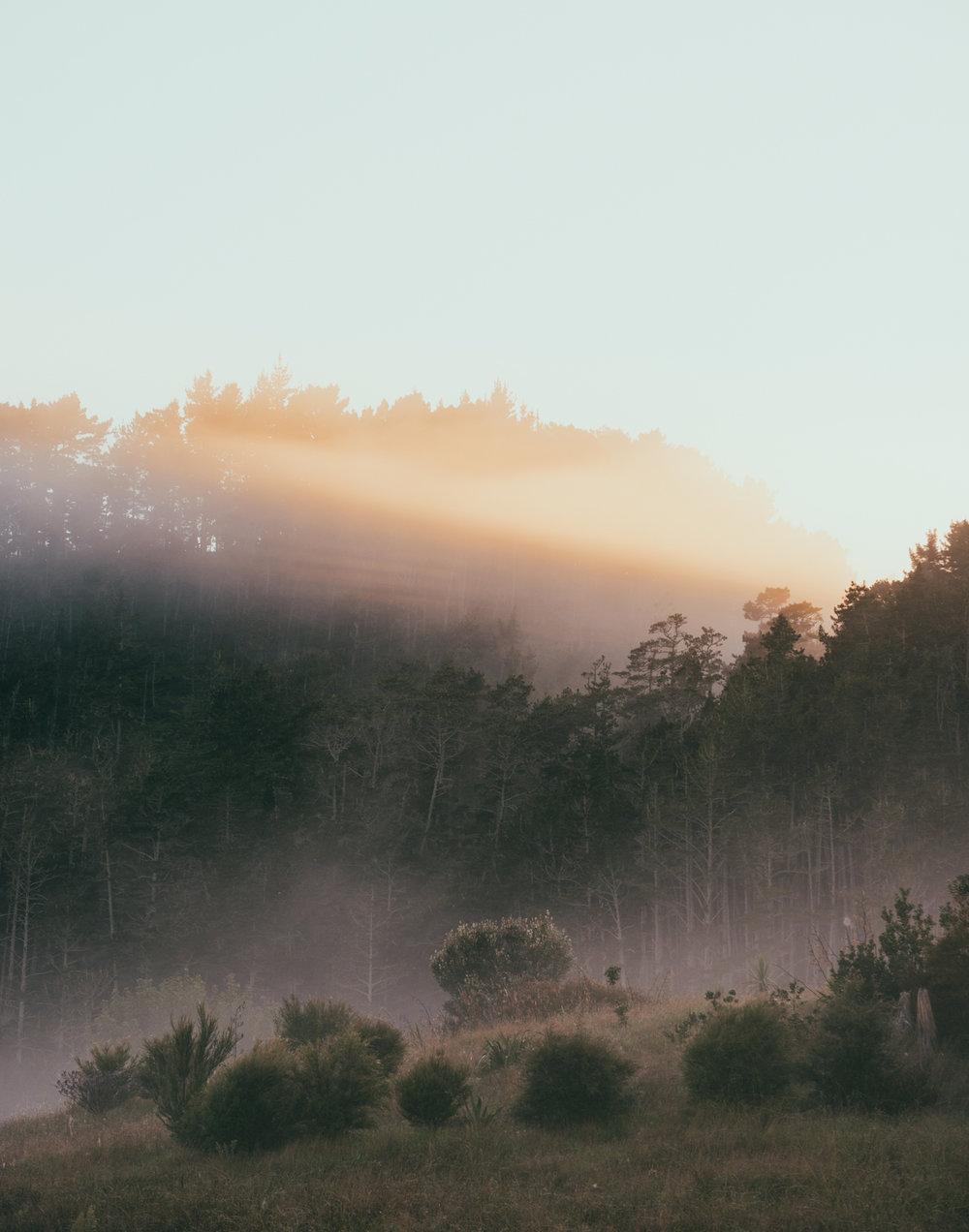 foggy coro between hahei and hotwater2.jpg