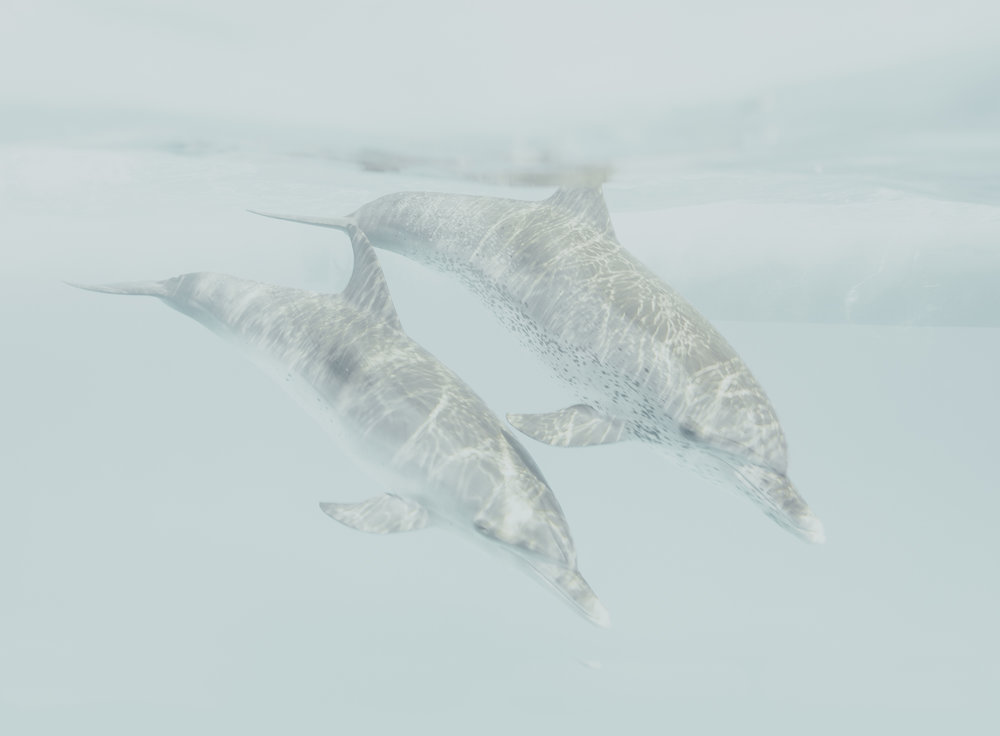 Dolphin play7.jpg