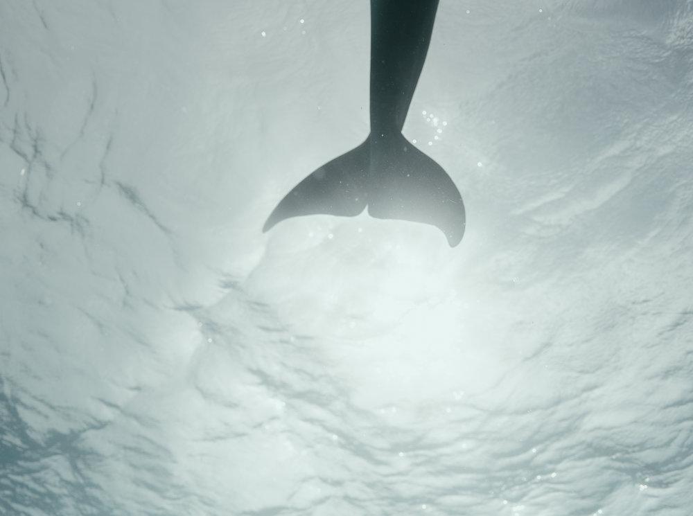 Dolphin tail 2.jpg