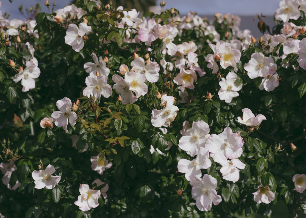 Street flowers-3.jpg
