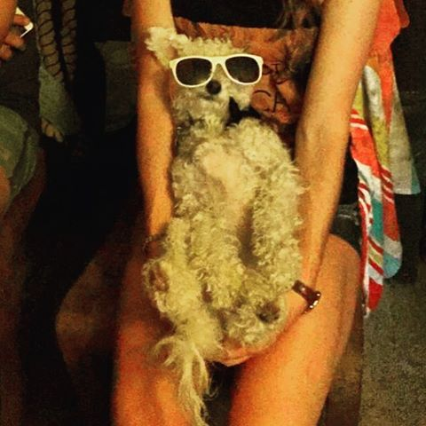Some say 'Casso, the studio mascot, has it pretty good in life... Kinda hard to tell in this picture! #personalpicasso #paintandsip #sanmarcos #sanmarvelous #bobcatnation #maltipoo #bichon #okayjustamutt #sunglassesatnight #lazyday #snooze #spoiledrotten