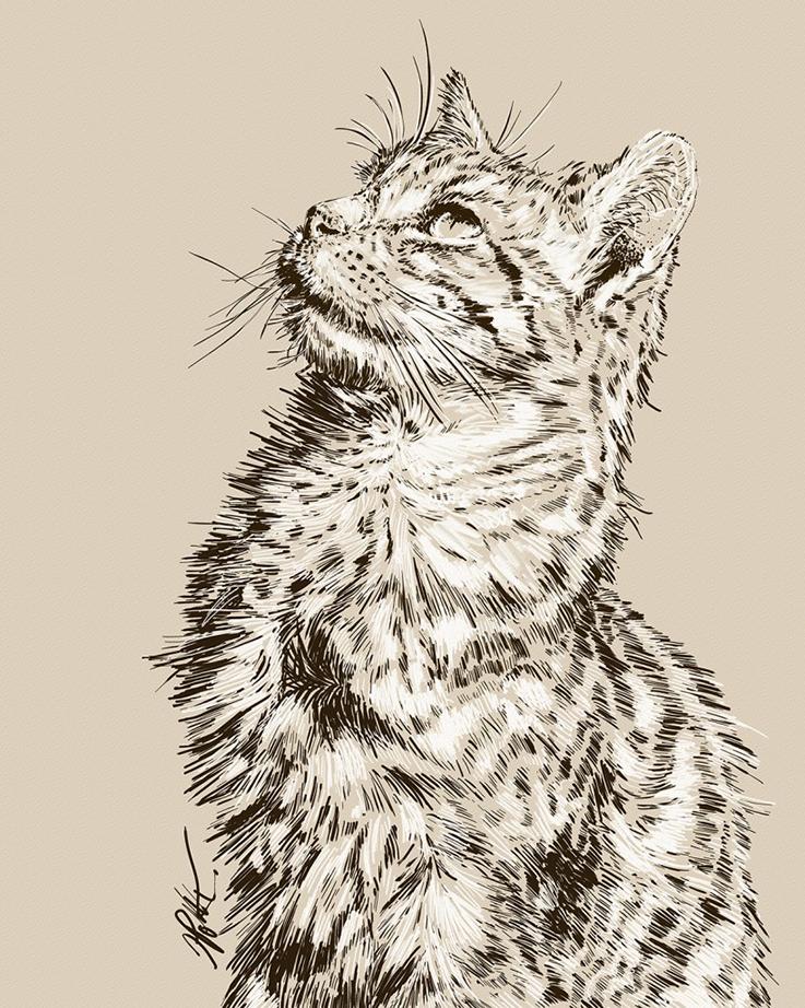 Digital Illustration - Cat Series