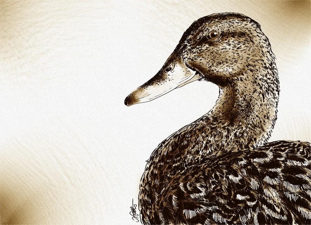 Digital Illustration - Bird Series