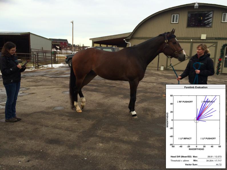 lameness Locator equine vet veterinarian doctor Calgary Cochrane Alberta
