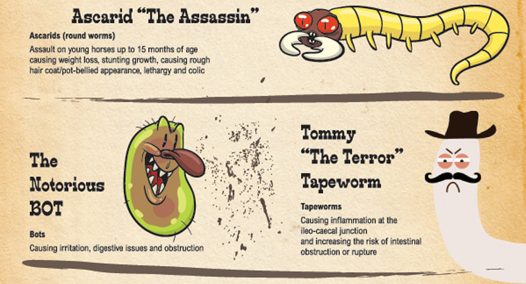 Photos credit:  http://www.horse.com/horse-articles/horse-parasites-infographic/9872/