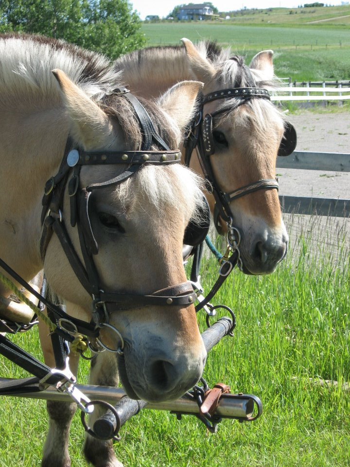 vaccine vaccination tetanus equine vet veterinarian doctor Calgary Cochrane Alberta