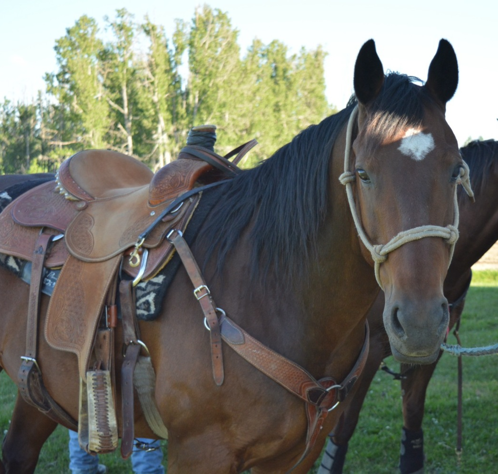 vaccine vaccination side potomac horse fever equine vet veterinarian doctor Calgary Cochrane Alberta