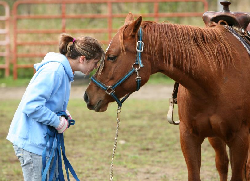 vaccine vaccination side rabies equine vet veterinarian doctor Calgary Cochrane Alberta