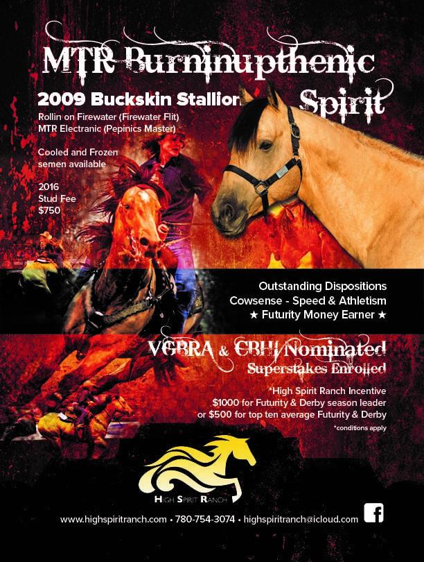 MTR Burninupthenic Spirit stallion standing alberta
