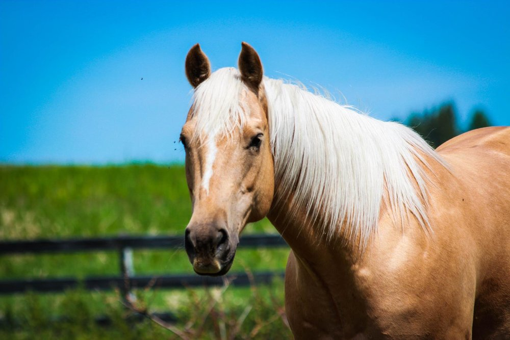 horse equine vet veterinarian doctor owner Cochrane Calgary Alberta