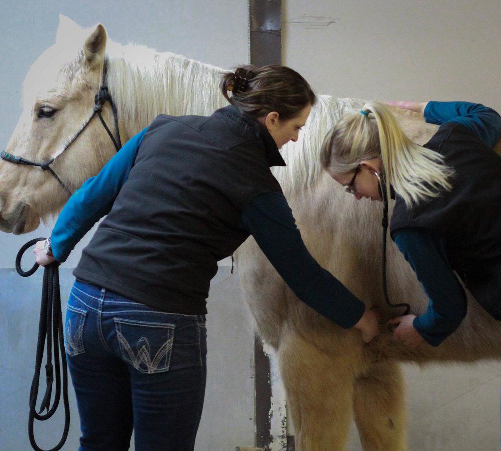 Equine Externships