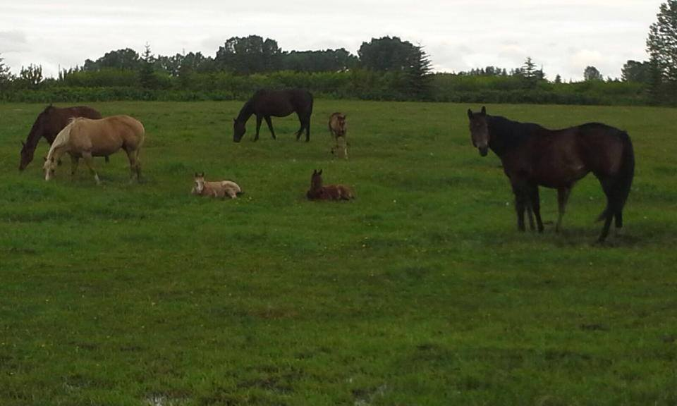 mares and foals_reproduction.jpg