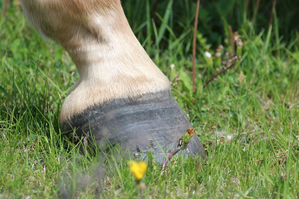 Equine Foot Snapshot.jpg