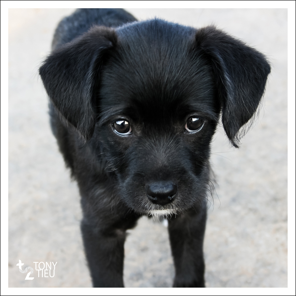 At 9 weeks old, I was getting much stronger, and I had the puppy-dog-eyes down!! I remember it was challenging training my human to take me out when I wanted to go pee. Look into my eyes. Human, you will do my bidding!