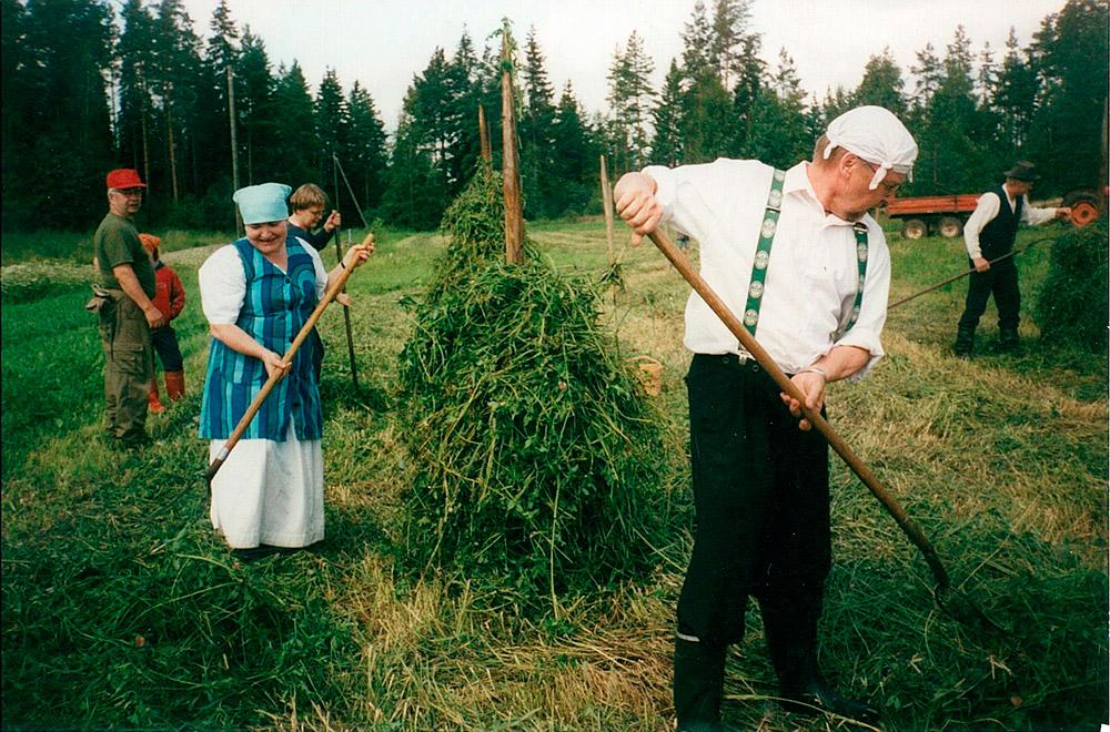 Suvun perinnepäiviä vietettiin vuonna 2002, tässä nostellaan apilaa seipäille.