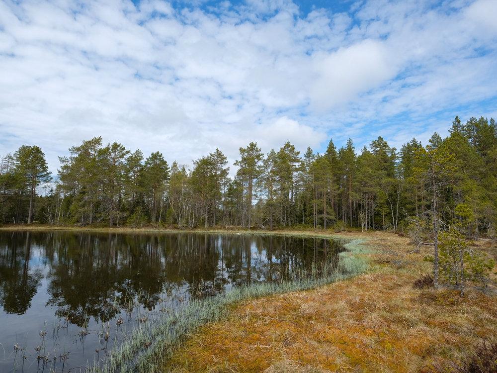 Forest pond in central Sweden