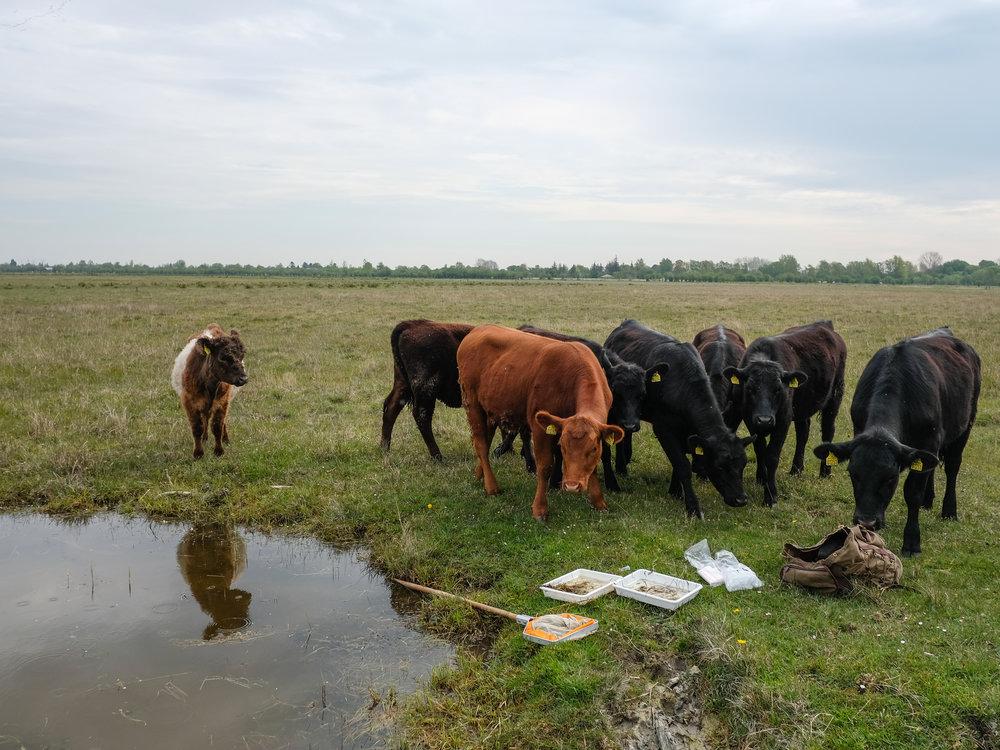 field work in Denmark..