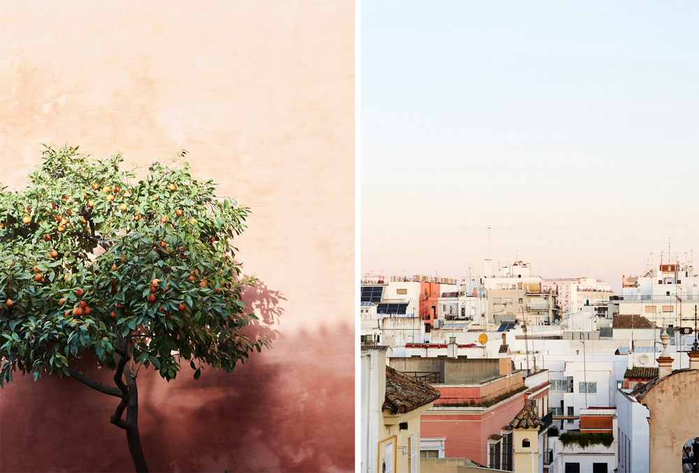 One of the many orange trees that scented the air; pink-tinted sunrise on the rooftop of Mercer Sevilla