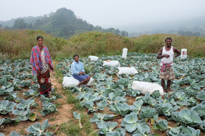 Pangi & Sanni (left and centre) work growing cabbages in their fields