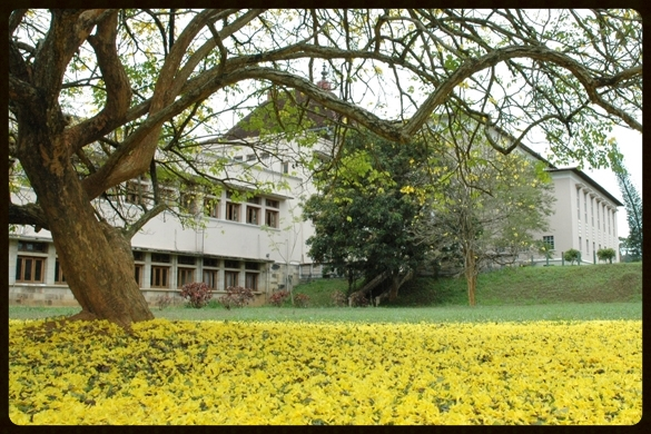 The University of Peradeniya